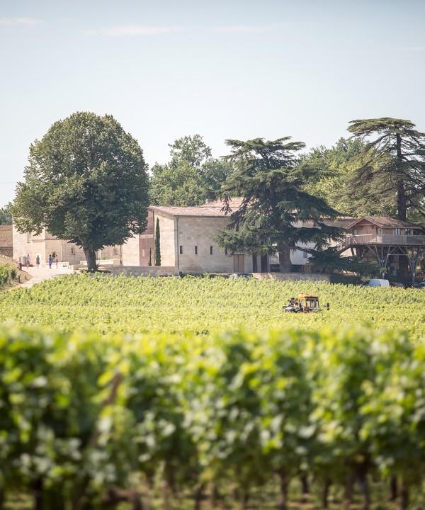 chateau-franc-mayne-saint-emilion-grand-cru-classe
